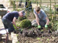 Jardins médiévaux - Horticulture